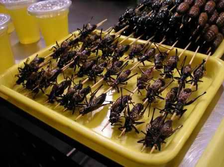 eating insects solves global malnutrition