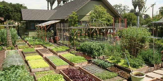 Backyard Farming to Commercial Farming is the Key