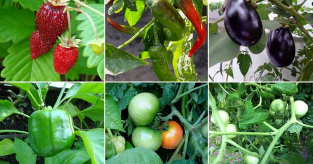 How to be an Agrivestor